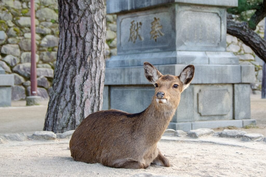 isla de Itsukushima
