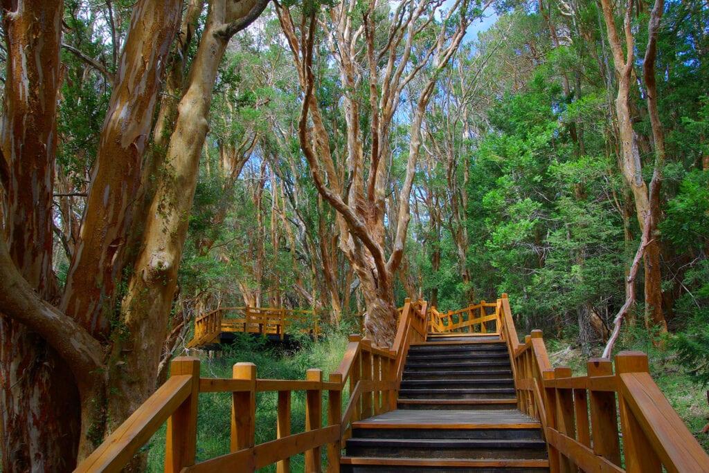 Bosque de Arrayanes, Villa la Angostura