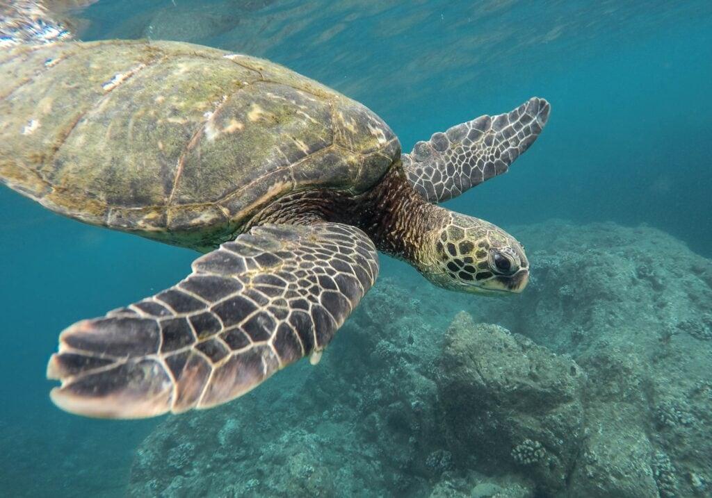 Vida marina, Australia