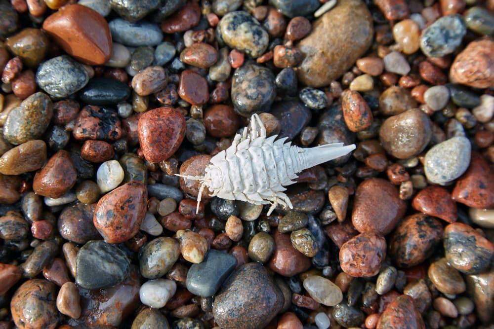 fósiles-marinos-en-Puerto-Pirámides