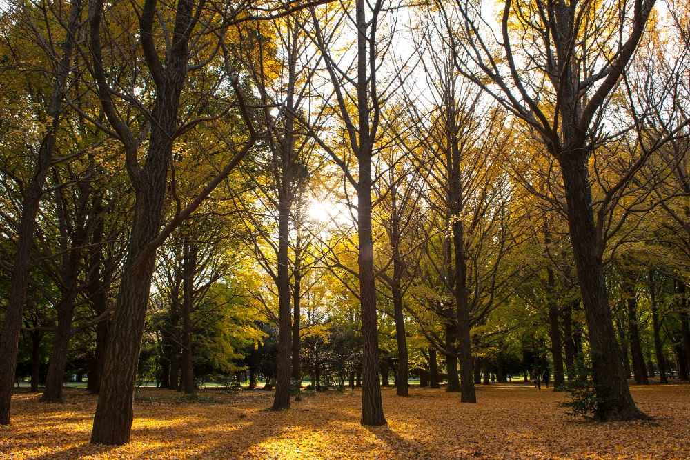 parque-yoyogi