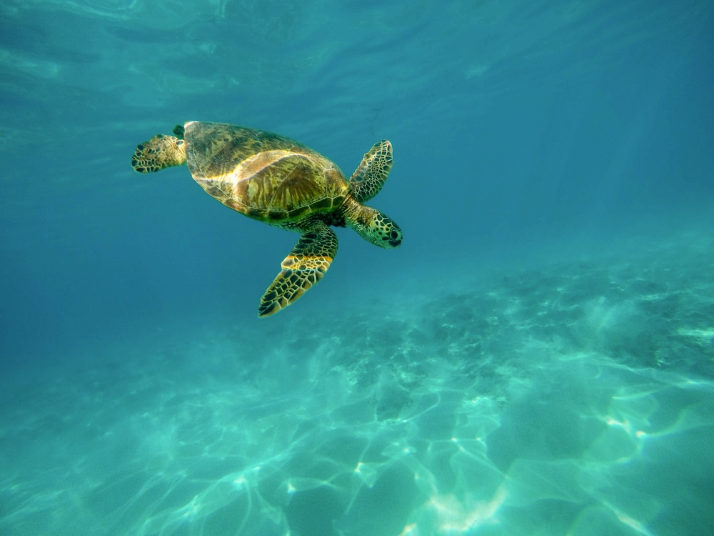 observación-de-tortugas-en-Rocha