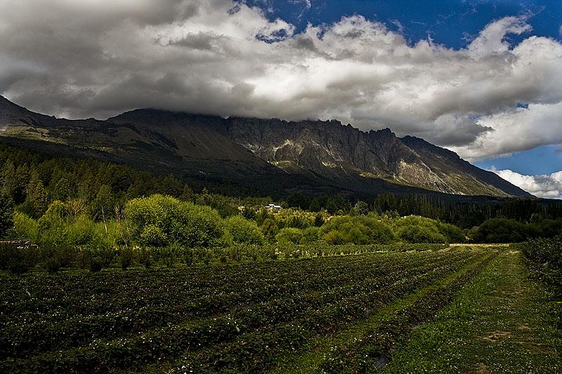 Los-Nogales-Patagonia-Argentina
